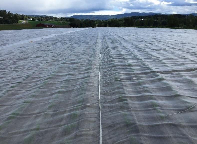 Tuholaistorjuntaverkko 13mx 50m   80 mesh UVsuojattu